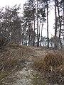 Cherkas'kyi district, Cherkas'ka oblast, Ukraine - panoramio (1012).jpg