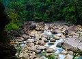 Cherrapunjee Rain Forests (7344204344).jpg
