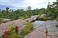 Chikanishing Trail8.jpg