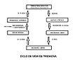 Ciclo Tridacna.jpg