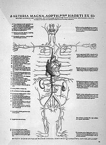 Le corps série du système : Le système circulatoire et ses fonctions (French Edition)