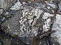 Clast-rich impact pseudotachylite (Sudbury Breccia, Paleoproterozoic, 1.85 Ga; Windy Lake Northwest roadcut, Sudbury Impact Structure, Ontario, Canada) 91 (47758866191).jpg