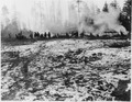 Clearing land at prison - NARA - 299559.tif