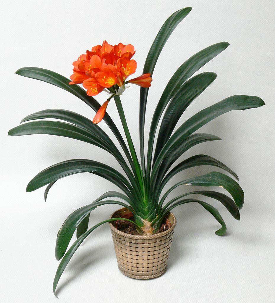 Plante En Pot Decoration