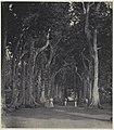 Collectie NMvWereldculturen, RV-A42-1-24, Foto, 'Groep dames en heren op een laan in de tuin van een particuliere woning in Batavia', fotograaf Woodbury & Page, ca. 1875.jpg