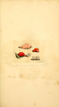 Coloured Figures of English Fungi or Mushrooms - t. 52.png
