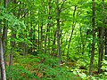 Conservation forest for genetic resources of trees in Kurokoyama.jpg