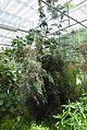 Conservatoire botanique national de Brest-Asparagus fallax-15 07 03-Philweb-07 (19414823655).jpg