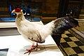 Coq pheasant (40308467072).jpg