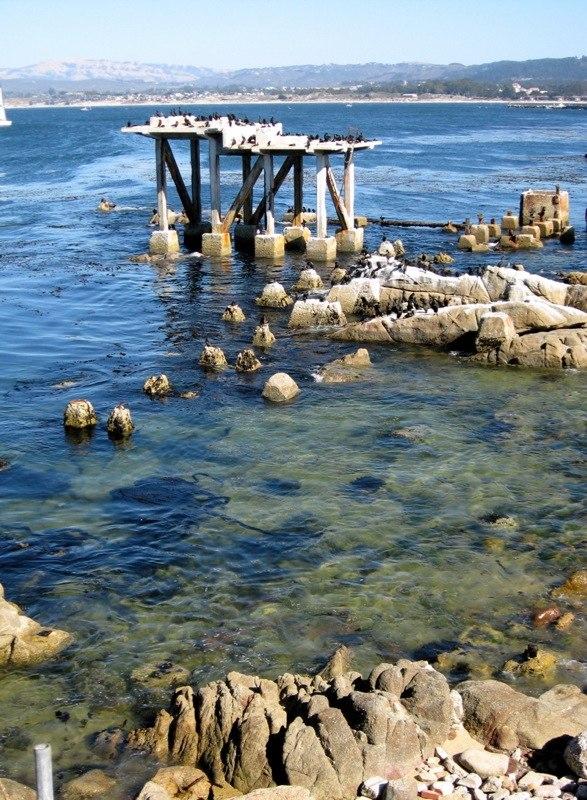Cormorant Condo in Monterey, CA