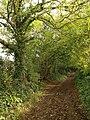 Cottles Lane, West Pennard - geograph.org.uk - 1024245.jpg