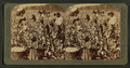 Cotton is king - A plantation scene, Georgia, from Robert N. Dennis collection of stereoscopic views 5.png