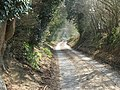 Country road from Harwoods Green to Stopham - geograph.org.uk - 1211817.jpg