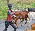 Cow Boy, Banna Tribe (8156909934).jpg