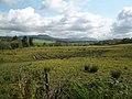 Dalmary, farmland with buttercups - geograph.org.uk - 1320432.jpg