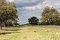 Damaraland- Etosha-2119 - Flickr - Ragnhild & Neil Crawford.jpg