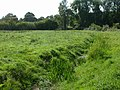 Damerham, water meadows - geograph.org.uk - 1484550.jpg
