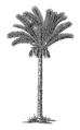 Date-palm 1 (PSF).png