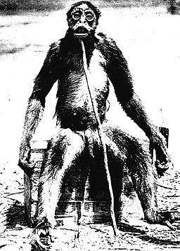 De Loys' Ape