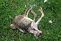 Dead rabbit 02 ies.jpg