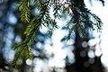 Deep inside forest (4511732379).jpg