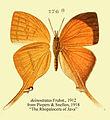 Deinostratus from Piepers&Snellen1918.JPG