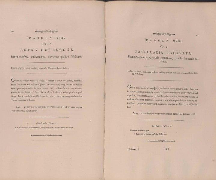 Dateidescriptio Et Adumbratio Plantarum E Classe Cryptogamica