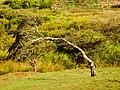 Desde arriba o desde abajo^ Orosi, Cartago, Costa Rica. - panoramio.jpg