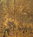 Detail, Thai manuscript cabinet from Thailand, British Library.png