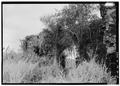 Detail of mill wall ruins. - Hacienda Azucarera La Lucia, Sugar Mill Ruins, Yabucoa, Yabucoa Municipio, PR HAER PR,81-CANUE,1A-19.tif
