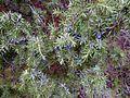Detalji iz Parka prirode Dobrun Rzav 01.jpg