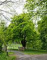 Detmold - 2014-05-07 - ND 5.11.2 Eiche.jpg