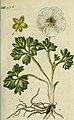 Deutschlands flora in abbildungen nach der natur (1806) (14760074301).jpg