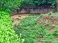 Dholes in Indira Gandhi Zoological park.jpg