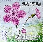 Dianthus gabrielianae armenian stamp.jpg