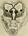 Die Entwickelung des menschlichen Gehirns - während der ersten Monate - Untersuchungsergebnisse (1904) (20291776183).jpg