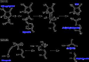 Dihydrolipoyl transacetylase - Image: Dihydrolipoyl transacetylase mechanism