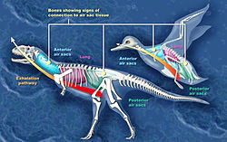 meaning of dinosaur