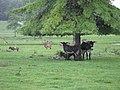 Donkeys (22976690241).jpg