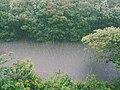 Downpour on a river (Unsplash).jpg