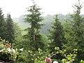 Droschka 2006 - panoramio.jpg