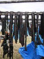 Drying Seal Meat.jpg