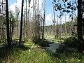Dworczysko - panoramio (53).jpg