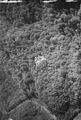 ETH-BIB-Küsnacht, Ruine Wulp v. W. aus 150 m-Inlandflüge-LBS MH01-005600.tif