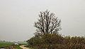 Eenzame wilg (Salix) aan fietspad om Langweerderwielen (Langwarder Wielen). Oostkant 05.jpg