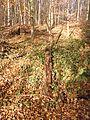 Ein Baumstamm im Wald.JPG