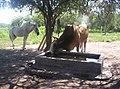 El torito - panoramio.jpg