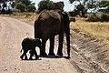 Elephants, Tarangire National Park (49) (28696571415).jpg