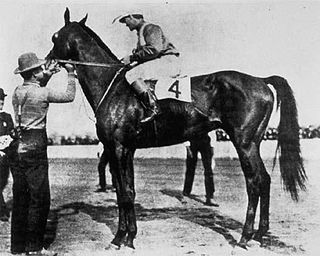 Elwood (horse) American-bred Thoroughbred racehorse