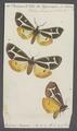Eucharia - Print - Iconographia Zoologica - Special Collections University of Amsterdam - UBAINV0274 055 05 0074.tif